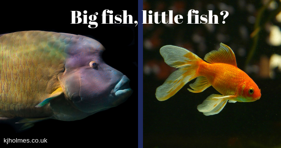 Picture of big fish and little fish small charities income